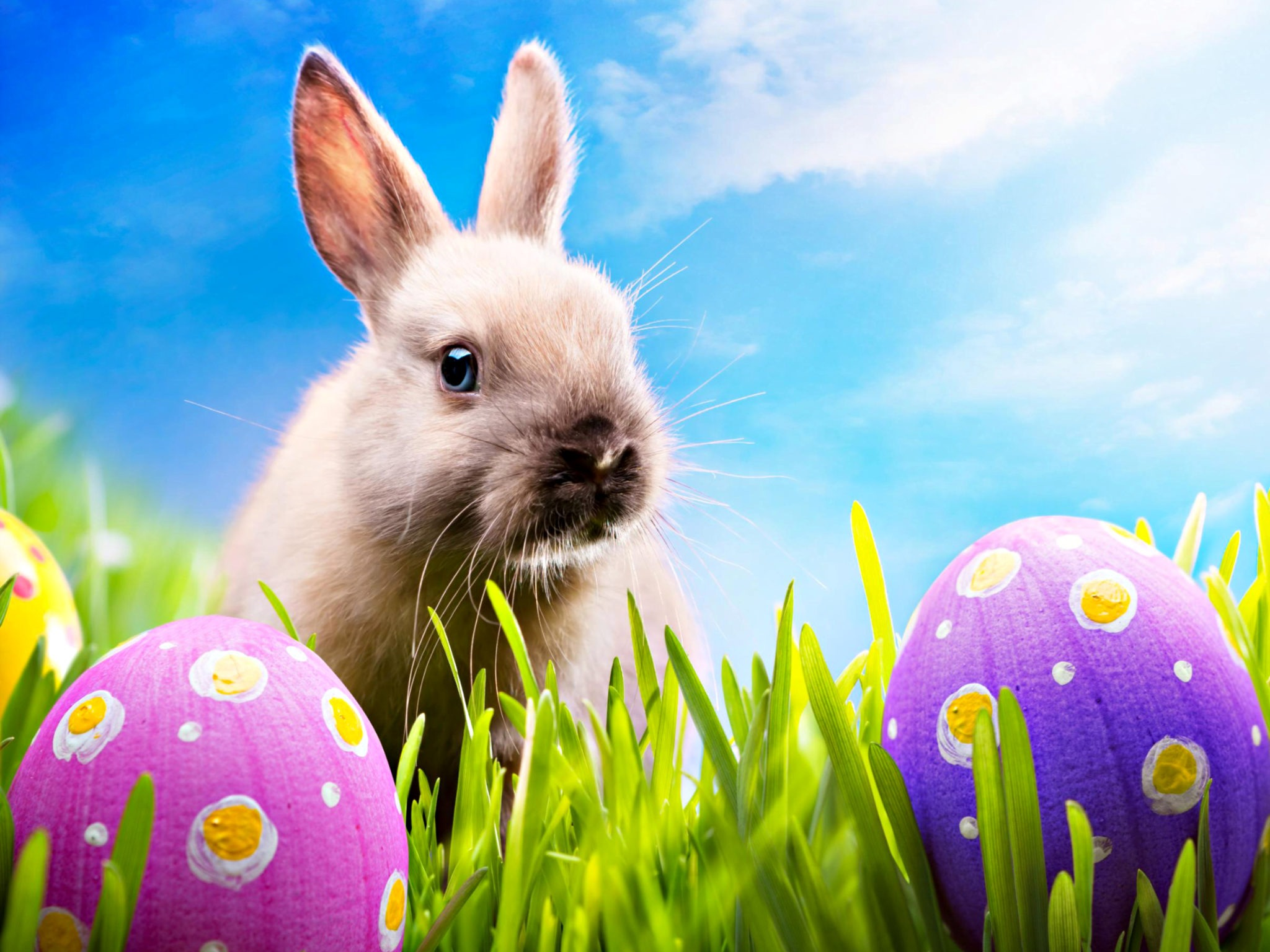 Crazy Easter Finds At Jersey Steamer